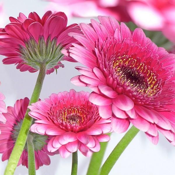 Serviette Atelier: Pretty in Pink