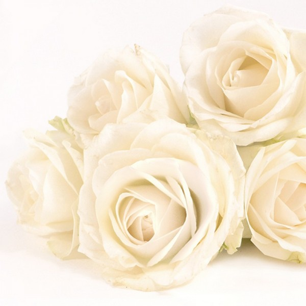 Serviette Atelier: Elegant Rose